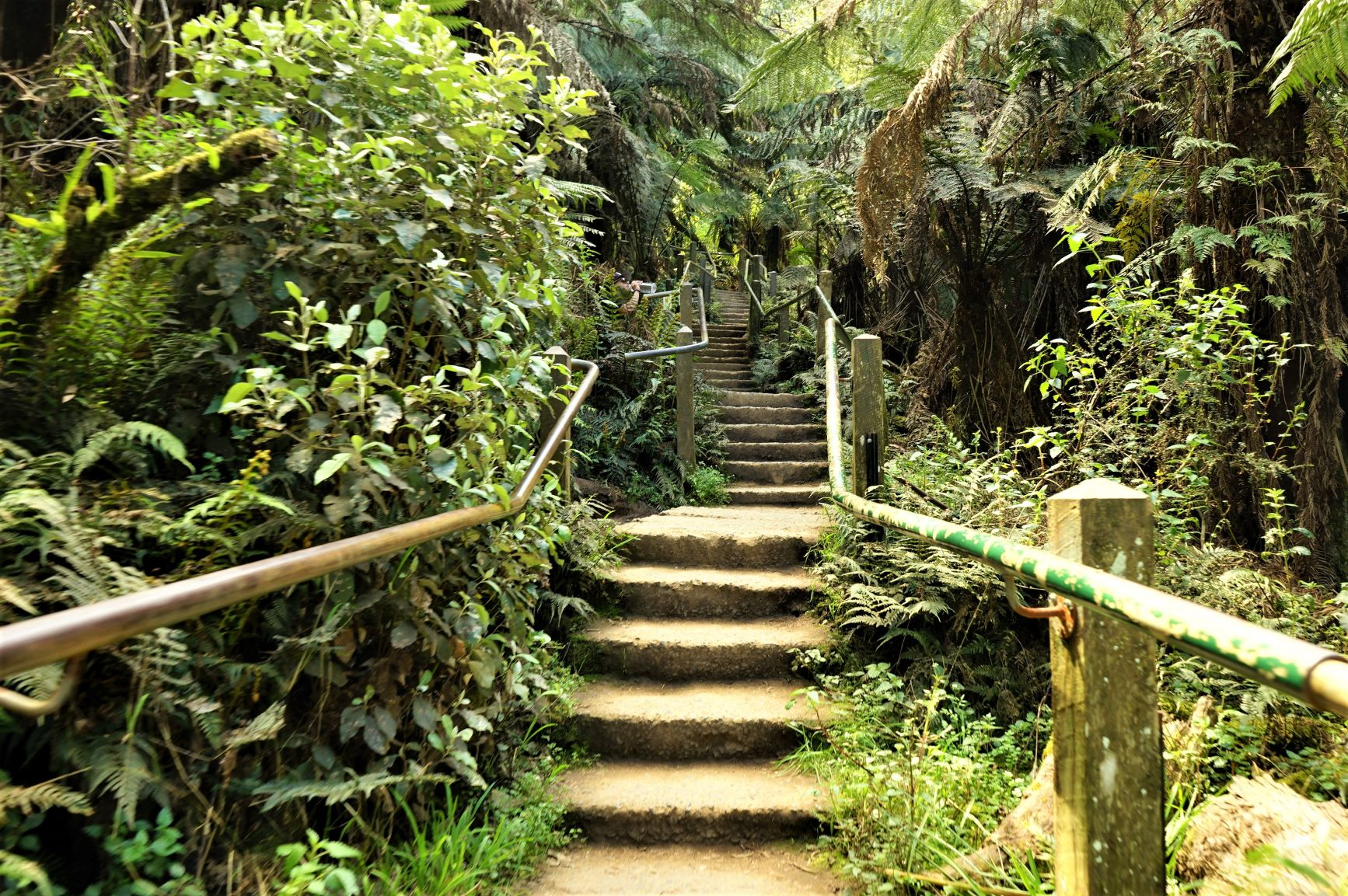 Conquer the 1000 Steps Dandenong (Challenge Yourself!)