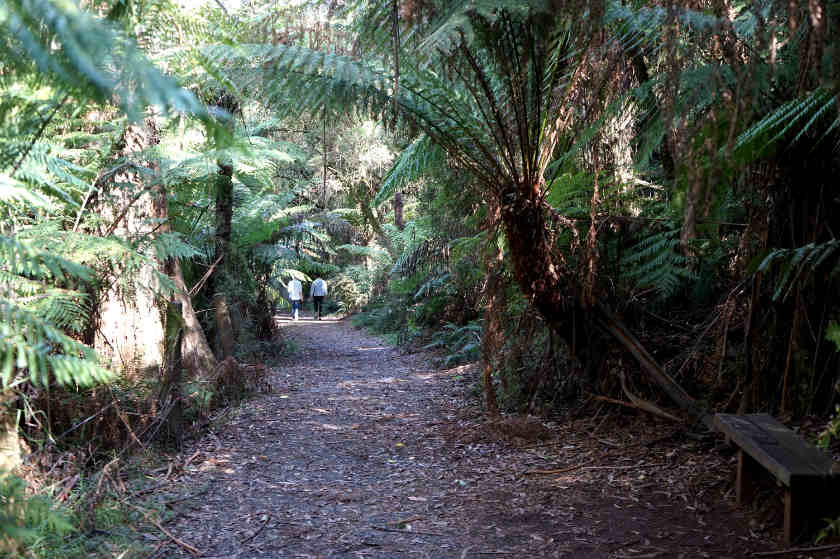 Sherbrooke Falls Trail, It's a Fun Escape (Only 55 minutes from Melbourne CBD)