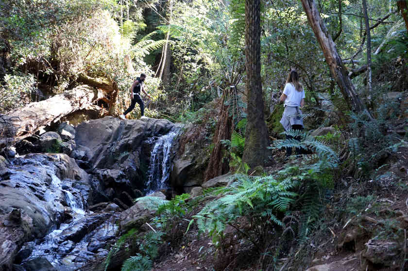 Olinda Falls Walk (A Peaceful Escape From Melbourne)